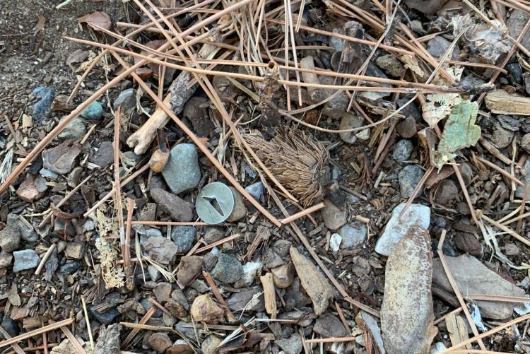 immagine delle puntine ritrovate nel parco