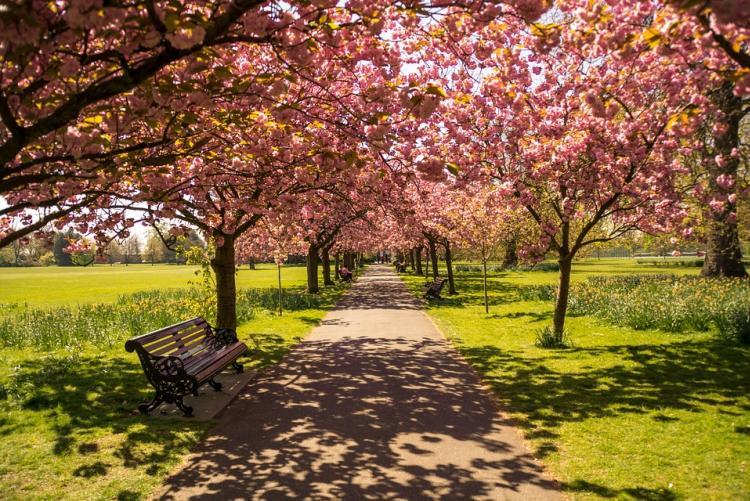 Foto di un parco pubblico
