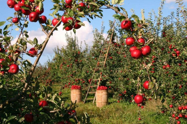 Un frutteto - Foto di lumix2004 da Pixabay