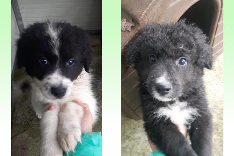Foto dei due cuccioli adottati