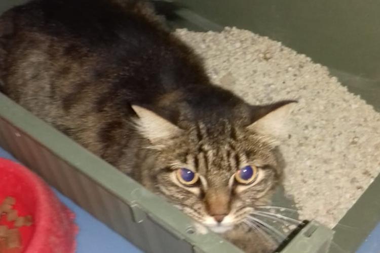 Foto della gatta trovata in viale dei Pini