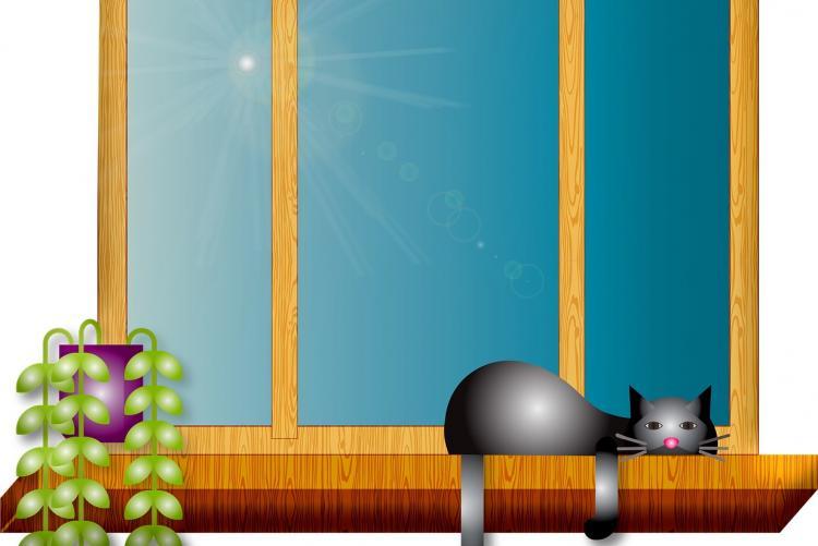 Disegno di una finestra con gatto e pianta