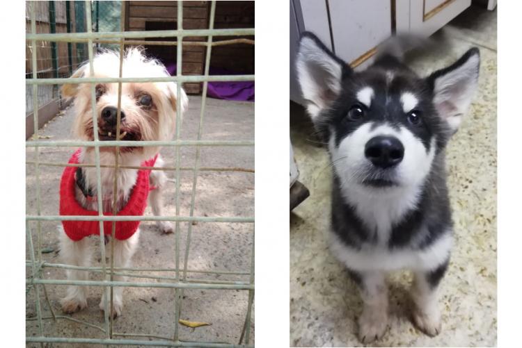immagine dei due cagnolini
