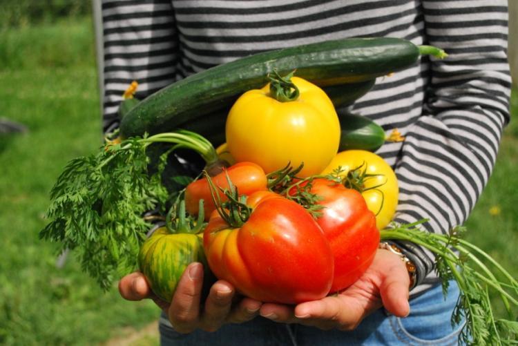 Immagine di verdura appena raccolta