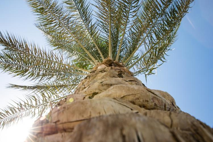 Foto di una palma