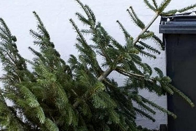 immagine di un albero di natale da smaltire